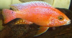 Fish Tank Maintenance Service Northern Virginia